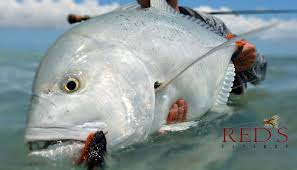 giant trevally fishing tips and gear for christmas island youtube