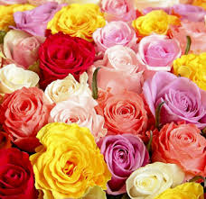 roses wholesale wholesale roses assorted choose your own colors