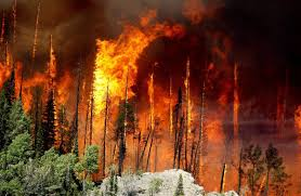 Wildfire Deaths Per Year by Out West Blistering Spell Undercuts Firefighters Fox2now Com