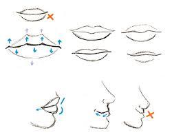 human anatomy fundamentals basics of the face