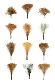 dried flowers dried flowers collection photograph by olivier le queinec