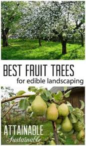 Small Trees For Backyard by 4 Ways To Grow Fruit Trees In Small Yards U2013 Making Diy Fun