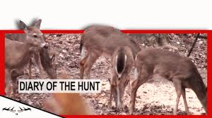 Bow Hunting From Ground Blind Ground Blind Deer Hunting Late Season Bow Hunt J Diary Of