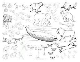 coloring pages animals hibernating 41 hibernating animals coloring pages 1000 images about bears and