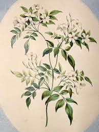 download jasmine flower tattoo small danielhuscroft com
