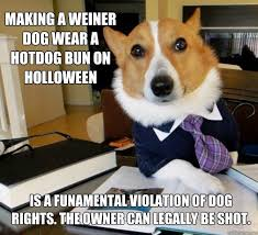 Weiner Dog Meme - making a weiner dog wear a hotdog bun on holloween is a funamental