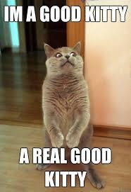 Meme Kitty - i m a good kitty cat meme cat planet cat planet