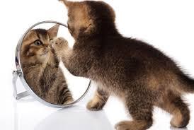 how do mirrors work mental floss