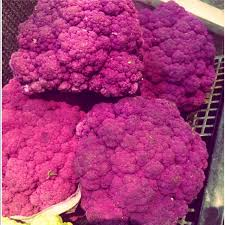 purple cauliflower information recipes and facts
