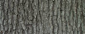 Backyard Sugaring Maple Sugaring Equipment And Supplies Home Bascom Maple Farms