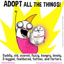Clean All The Things Meme - adopting an animal makes life go from monotone to technicolor
