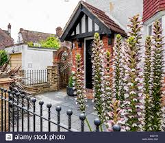 english home with tudor style gable stone slabs and acanthus english home with tudor style gable stone slabs and acanthus flowers in front garden twickenham