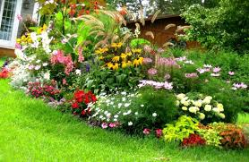 use layers in the garden hostas around trees and hostas around my