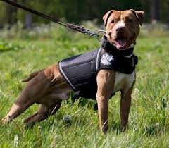 rogue royalty weight vest for dogs