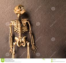 halloween skeleton bones royalty free stock image image 6050066