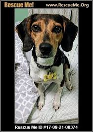 bluetick coonhound rescue nc nebraska bluetick coonhound rescue u2015 adoptions u2015 rescueme org