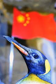 Machine 脿 Caf茅 Grande Capacit茅 Pour Collectivit茅s Et Read China Penguins Shine At Flag Raising Ceremony