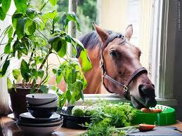 horse kitchen curtains kitchen tag wallpapers grandma kitchen flowers blue tulips blooms