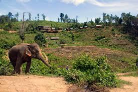 eco bungalows near chiang mai spicy villa eco lodges chiang mai
