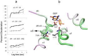 ric 8a a g protein chaperone with nucleotide exchange activity