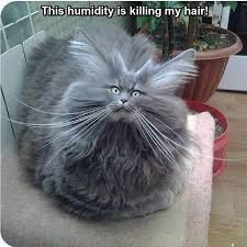 Bad Hair Day Meme - bad hair day cat pictures photos and images for facebook tumblr