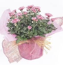 Birthday Flowers Delivery Flower Bouquets Gifts By Interflora Nz Delivery International