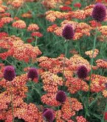 Summer Flower Garden Ideas - 76 best hillside plants images on pinterest landscaping