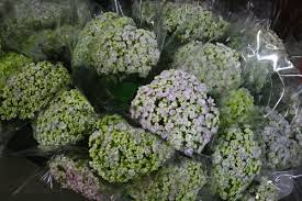 wholesale hydrangeas amato s wholesale floral design show cont flirty fleurs the
