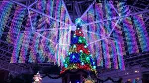 joyful 6 story tree light show debut at gaylord palms