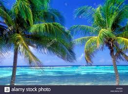 view of palm trees and horizon on the island of grand cayman