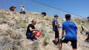 nevada native plants programs natural resources weeds and invasives blm control