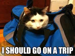 Travel Meme - travelling cat memes quickmeme