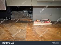 baseboards kitchen cabinets mouse trap on floor next baseboards stock photo edit now