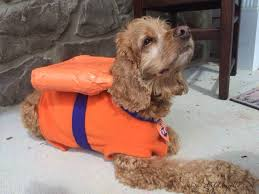 Halloween Costumes For Dogs Halloween Costume For The Dog Zuma From Paw Patrol Diy Danielle
