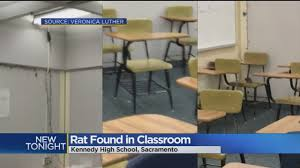 Student Throws Desk At Teacher Substitute Teacher Says She Was Taken Off Job After Reporting Rat