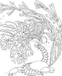 sea plants coloring pages coral reef coloring book sample dover color it pinterest