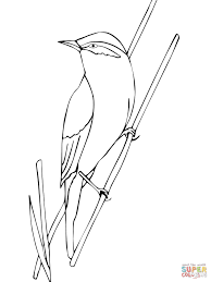 warbler bird coloring page free printable coloring pages