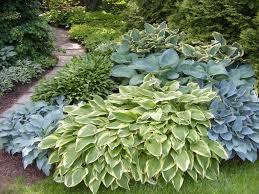 Design A Garden Layout Hosta Garden Layout Ideas 20 Wonderful Hosta Garden Ideas Design