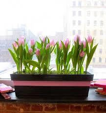 11 best indoor plants images on pinterest indoor plants indoor