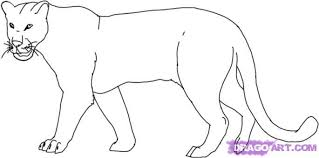 draw a leopard step by step drawing sheets added by dawn