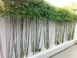 landscape bamboo landscaping design with white stone design and