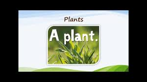 what do plants need to grow youtube