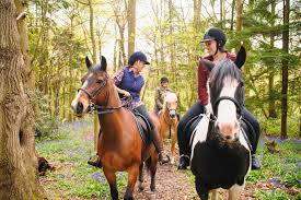 horse games and activities for play days