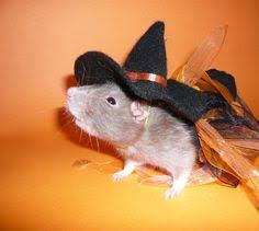 Halloween Rat Costume Zodiac Pet U0026 Exotic Hospital