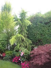 landscape shrub screens sons landscaping long island new