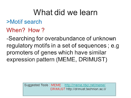 Meme Motif Search - biological networks ppt video online download