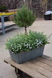 Eugenia Topiary Detroit Garden Works Dirt Simple Part 2