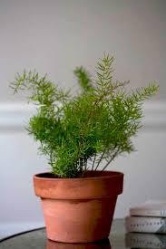 low light house plants best houseplants 9 indoor plants for low light gardenista