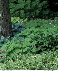 Landscaping Ideas Around Trees Planting Under A Tree Fine Gardening