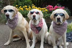 pets news tips u0026 guides glamour no bones about it guide dogs for the blind u0027s blog july 2011